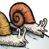 Snail Harassment